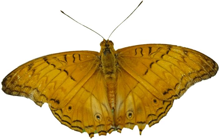 صورة اسم ذكر الفراشه , لقب ذكر الفراشة