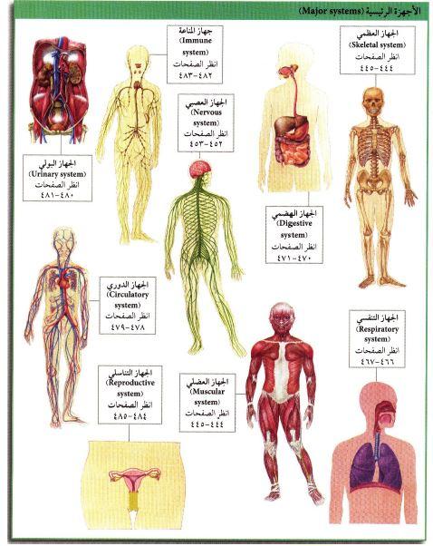 صور اجهزة جسم الانسان بالصور , ماهي الاجهزه التي يتكون منها الجسم البشري