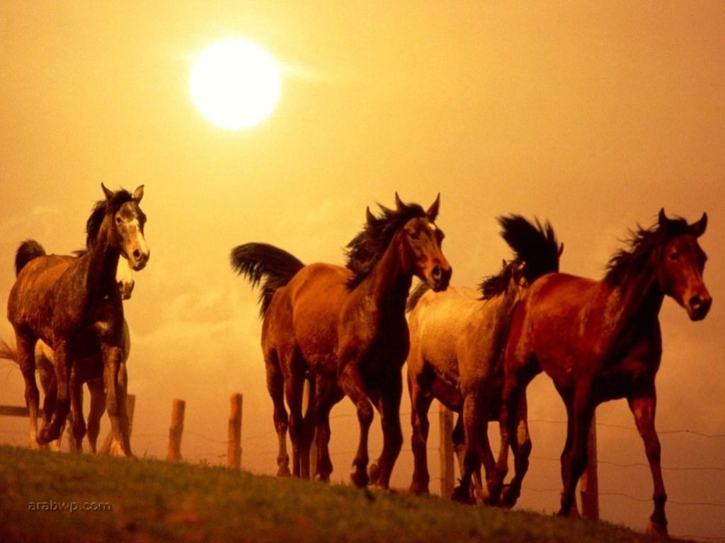 صورة تفسير حلم الحصان البني للمتزوجه , تفسير الخيل البني في المنام