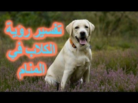 صور رؤية كلاب في المنام , تفسير حلم الكلب في المنام