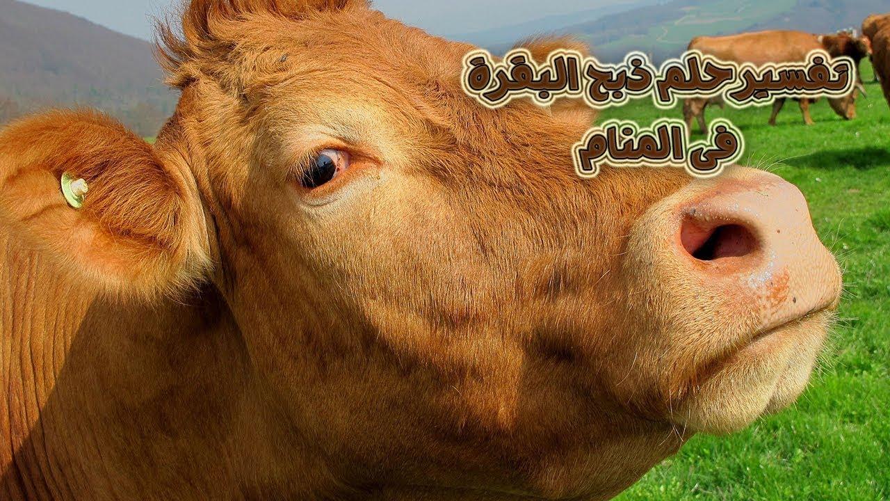 صورة تفسير حلم ذبح البقرة , معني دبح البقره في المنام