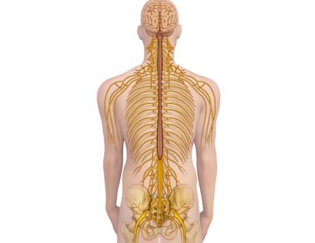 صور علاج العصب الحائر , ماهو العصب الحائر و اسباب التهابه و طرق علاجه