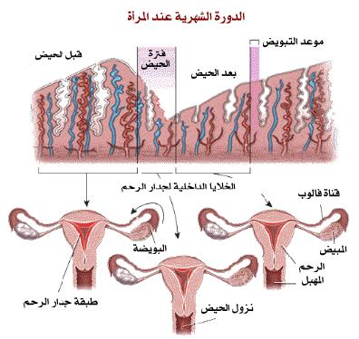 صور الدورة الشهرية الطمث , اسباب نزول دم الحيض