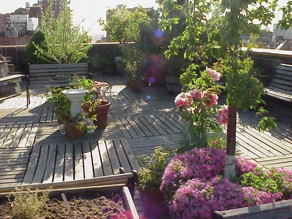 صورة حدائق منزلية فوق السطح , افكار جميله لاستغلال السطح