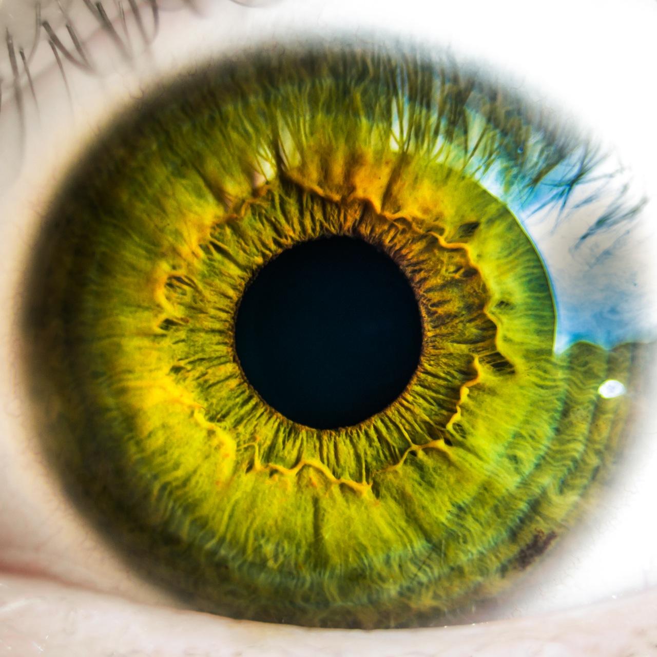 صورة اقسام العين ووظائفها , شرح مكونات العين الداخليه والخارجيه