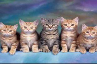 صور رؤية القط في المنام , تفسير رؤيه القط في الحلم