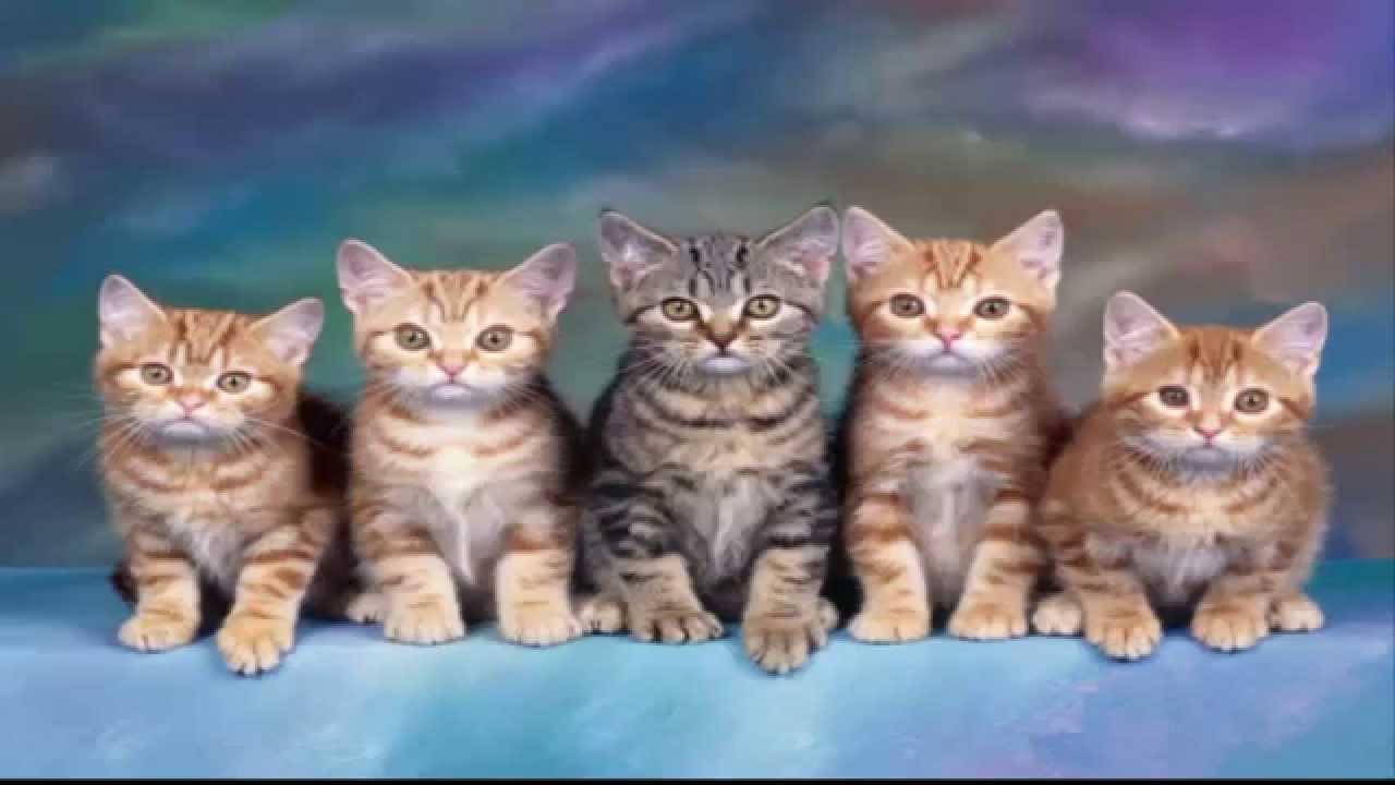صورة رؤية القط في المنام , تفسير رؤيه القط في الحلم