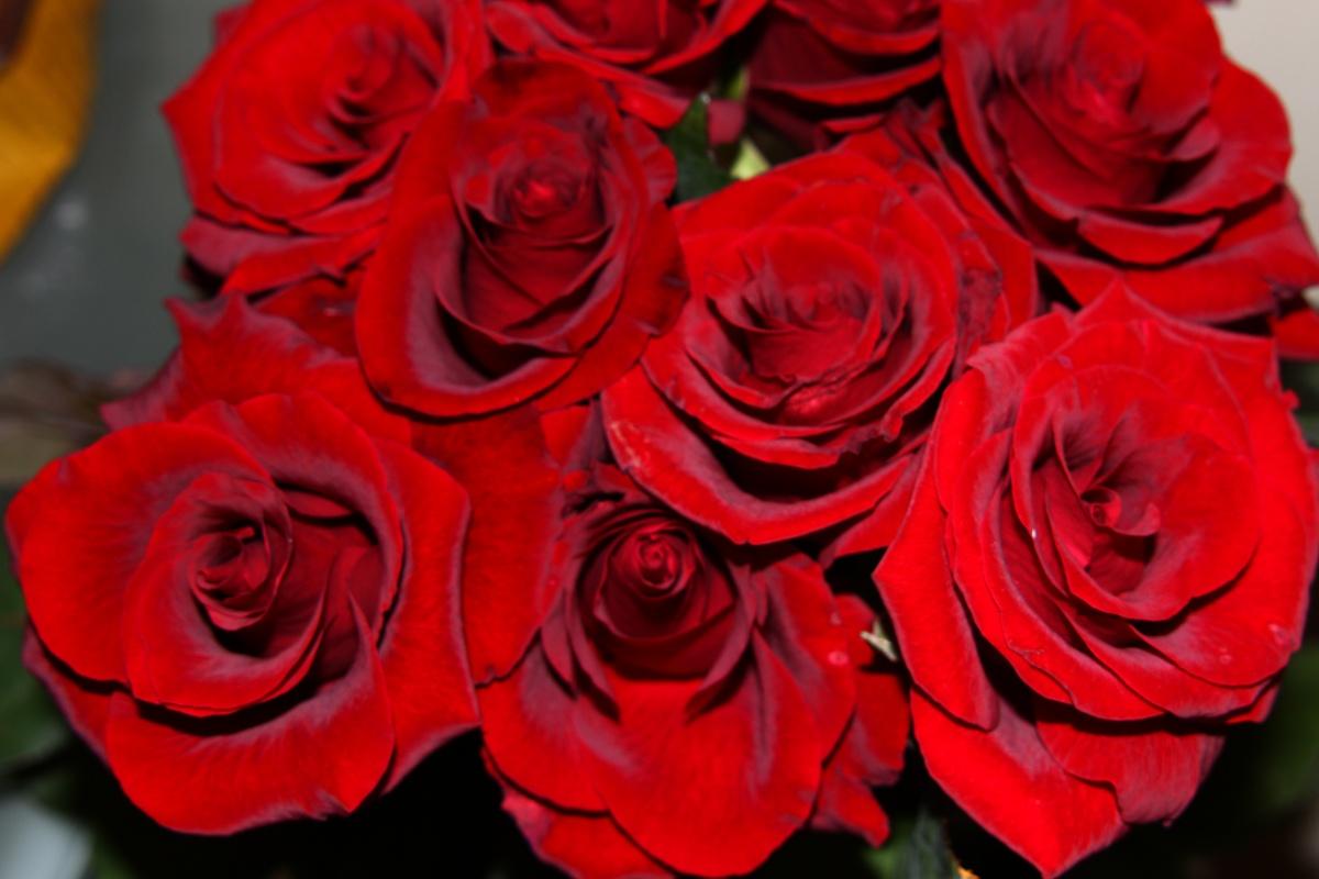 رمزيات ورد احمر صور ورود حمراء جميله شوق وغزل