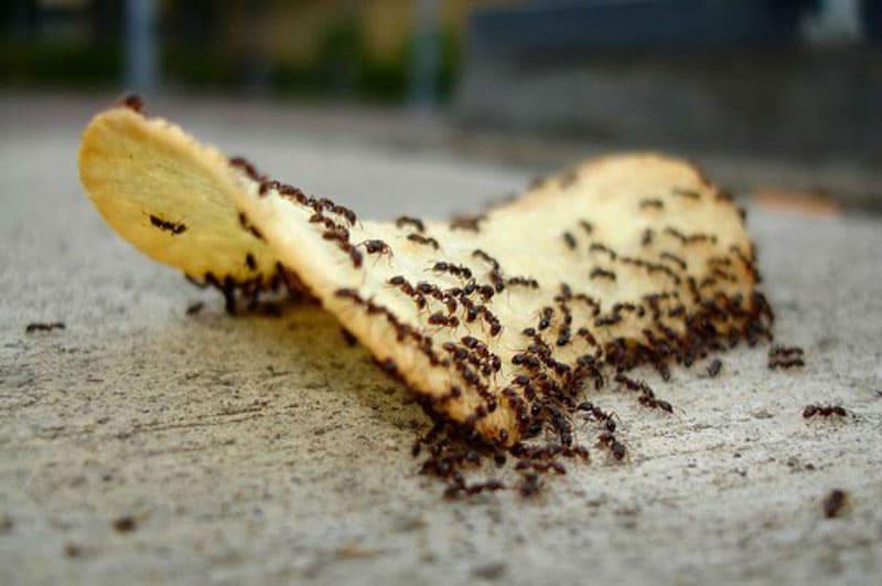 صورة اسباب وجود النمل الصغير بالبيت , الاسباب الشائعة والسرية لوجود النمل