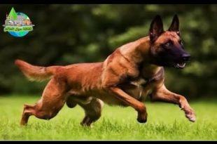 صور احسن كلاب في العالم , اقوي و اجمل كلاب