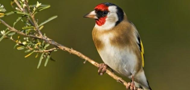 صورة اسماء طيور تطير , اسماء الحيوانات القادرة على الطيران فى العالم