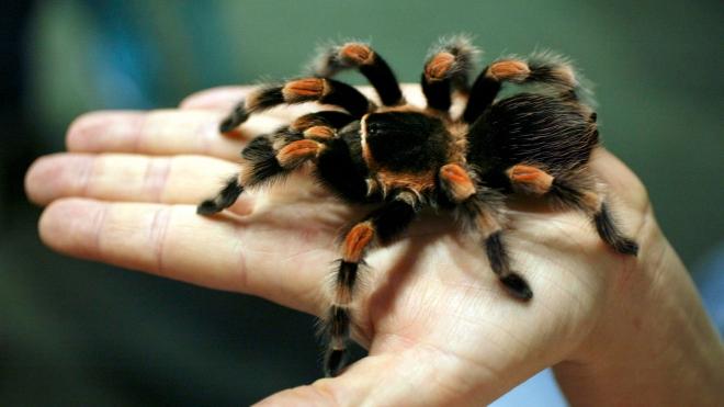 صور فصيلة الحيوانات بدون عمود فقري , ما لا تعرفة عن اللافقاريات ؟
