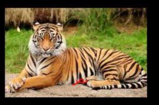 صور حيوانات غير اليفة , بالصور تعرف على انواع الحيوانات المفترس
