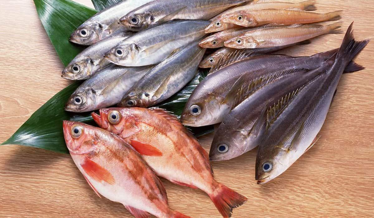صورة السمك الكثير في المنام , رؤيه السمك في الحلم