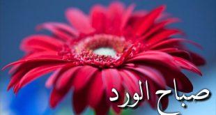 صور صباح الخير شعر بدوي , اشعار في جمال الصباح