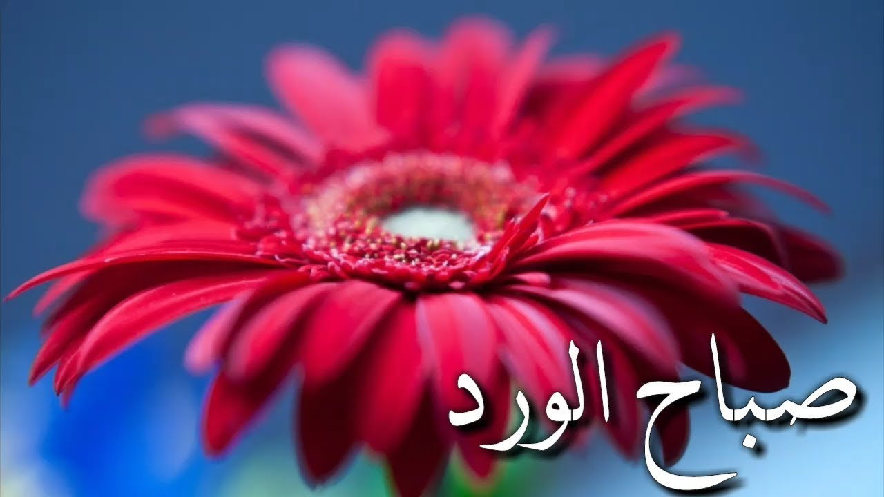 صورة صباح الخير شعر بدوي , اشعار في جمال الصباح