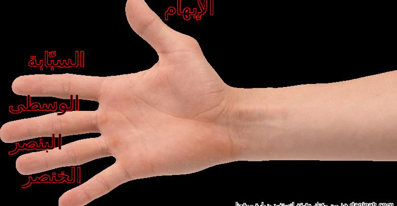 صور اسماء اصابع اليد بالعربية , اسماء و ترتيب الاصابع