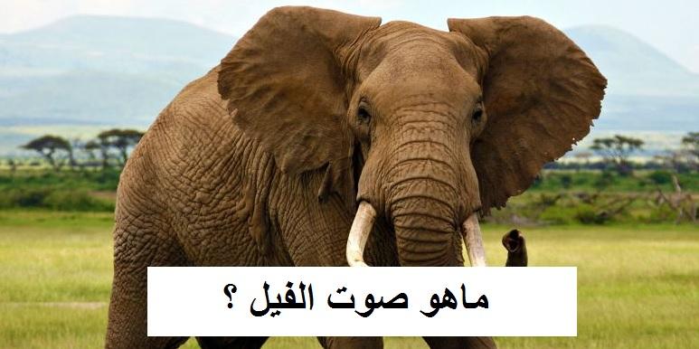 صور ما هو صوت الفيل , بما يسمي صوت الفيل