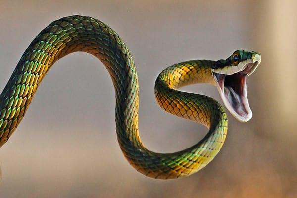 صورة تفسير حلم الثعبان لابن سيرين , معني الافعي في الحلم