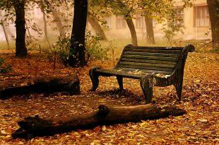 صورة اجمل ما قيل في الخريف , اقوال وعبارات عن الخريف
