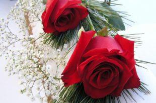 صورة صور ورود وقلوب , بوستات ورد جميلة هدية للعاشقين