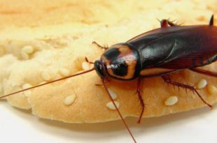 صور القضاء على الصراصير في المطبخ , مطبخ نظيف بلا صراصير