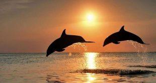 صور التنقل عند الحيوان , معلومات هامة عن تنقل الحيوانات