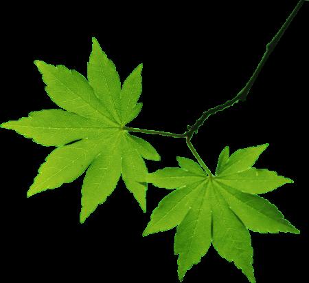 صورة اشكال اوراق الشجر , صور لاشهر انواع ورق الشجر