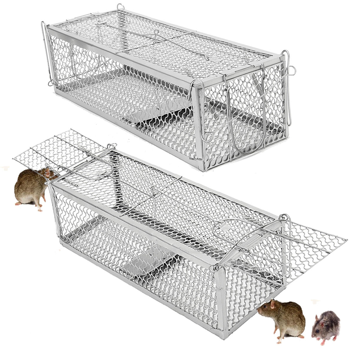 صورة كيفية طرد الفئران من المنزل , اقوى وسيلة لطرد الفئران