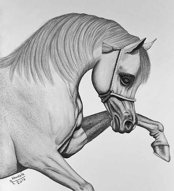 صورة رسم حصان بالرصاص , تعلم الرسم باحترافية بخطوات بسيطة وسهلة