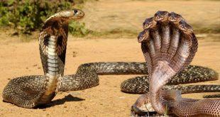 صورة الفرق بين الحية والثعبان , هل هم واحد