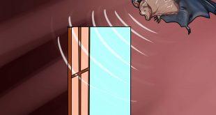 صورة الخفاش في البيت , هل يوجد هو خطر