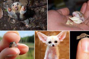 صورة اصغر حيوان في العالم , هل يوجد ما لا نعرفه