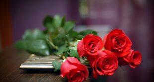 صورة تفسير الاحلام الورد الاحمر , جماله لا يعلو عليه