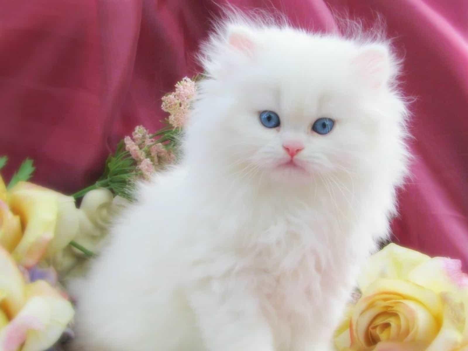 صورة تفسير القطة في الحلم , اكثر التفسيرات الغريبة