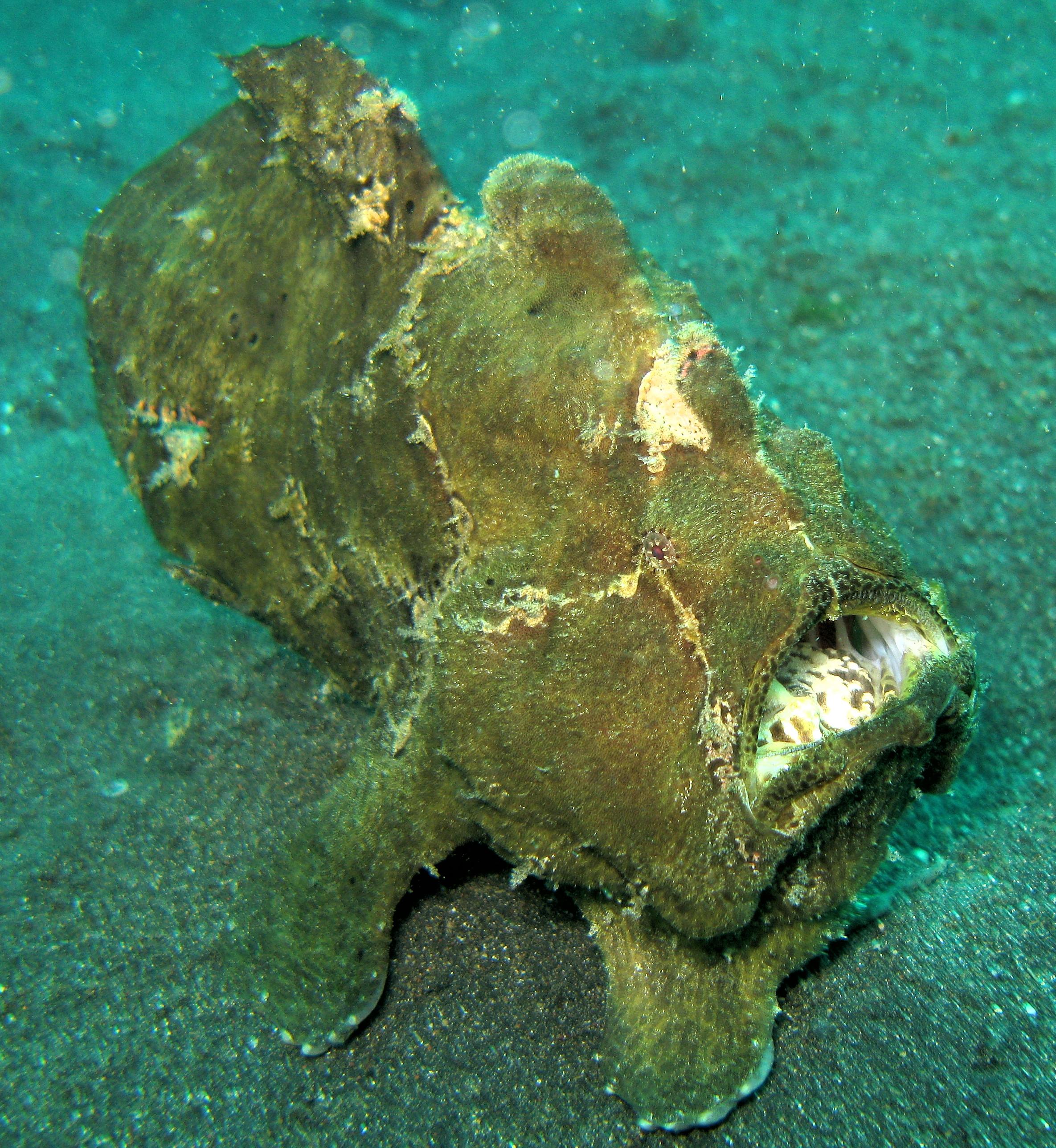 صورة صور اسماك غريبة , اروع واجمل صور الاسماك الغريبة