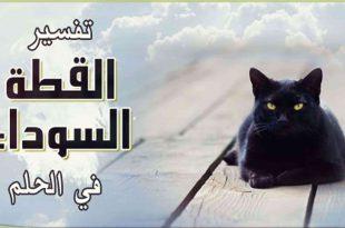 صورة تفسير حلم القط الاسود , القط الاسود وما رسالته لك