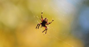 صورة في المنام عنكبوت , مفاجاه العنكبوت فى منامك