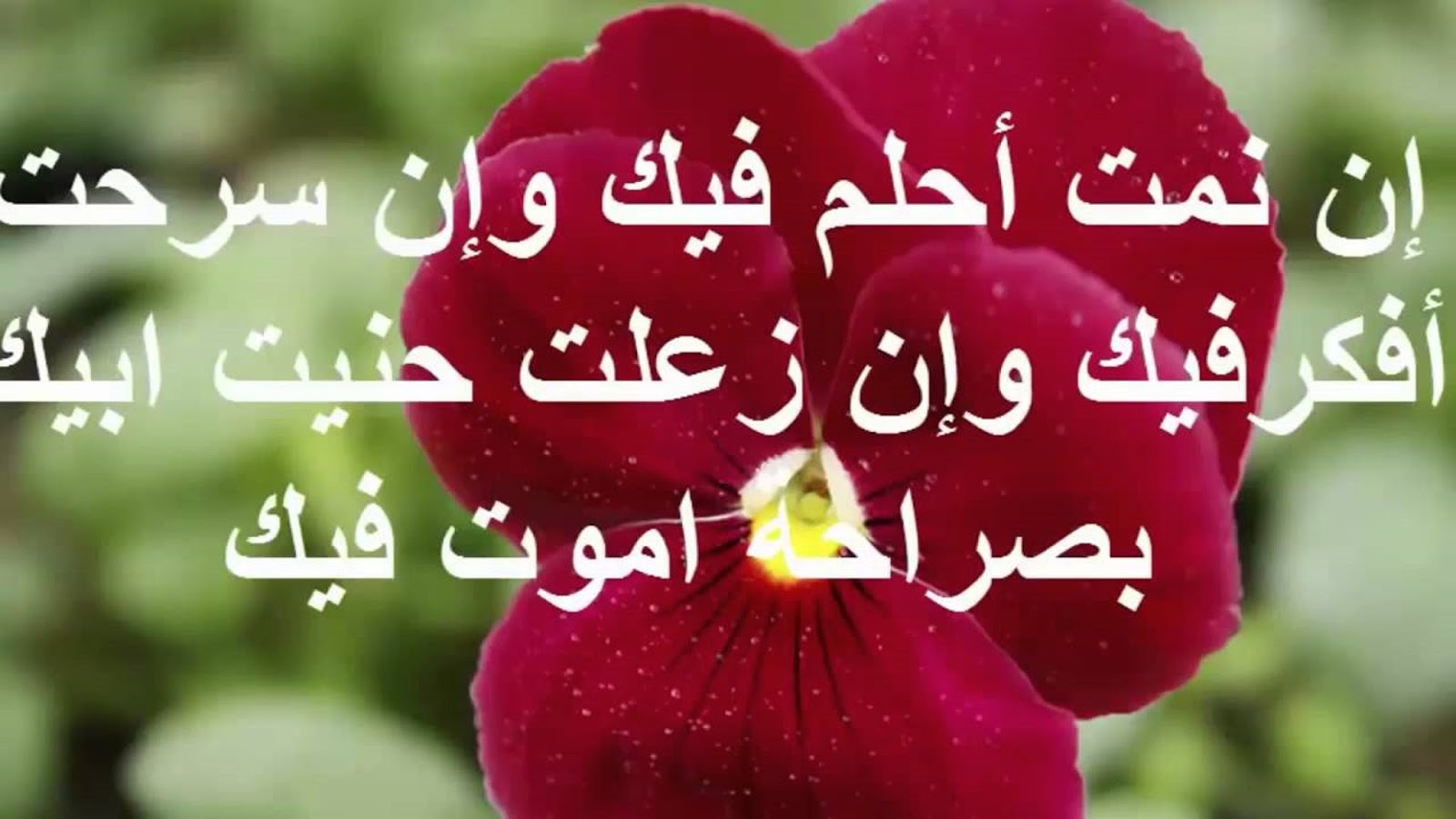 صورة رسائل الحب قصيرة , اقصر رسائل صباحيه محبه 5753 3