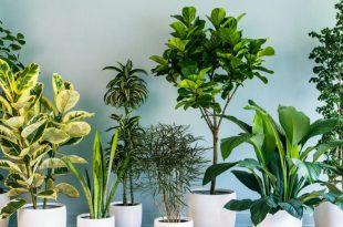 صورة رؤية النباتات في المنام , النبات وتفسيرة المفاجاء فى منامك