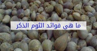 صورة فوائد الثوم الذكر اليمني , الثوم اليمنى ومعجزة فى العلاج