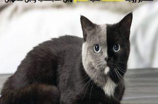 صورة رؤية القطة في المنام،معني القطط السوداء في الحلم