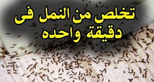 صورة وصفة للقضاء على النمل , طرق طبيعيه للتخلص من النمل