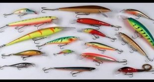 صورة احسن طعم لصيد السمك،افضل طعم لصيد البلطي