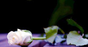 صورة صور ورد تجنن , اجمل صور الورد واروعهم